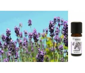 MS-EOLA Lavender / Sensoli Essential Oil